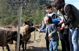 feed-the-sheep
